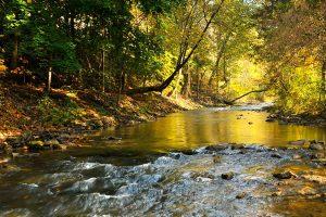 Tyson-Farms-spill-contaminates-river-with-ecoli.jpg